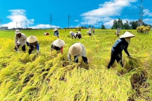Quy định về quản lý, sử dụng đất trồng lúa